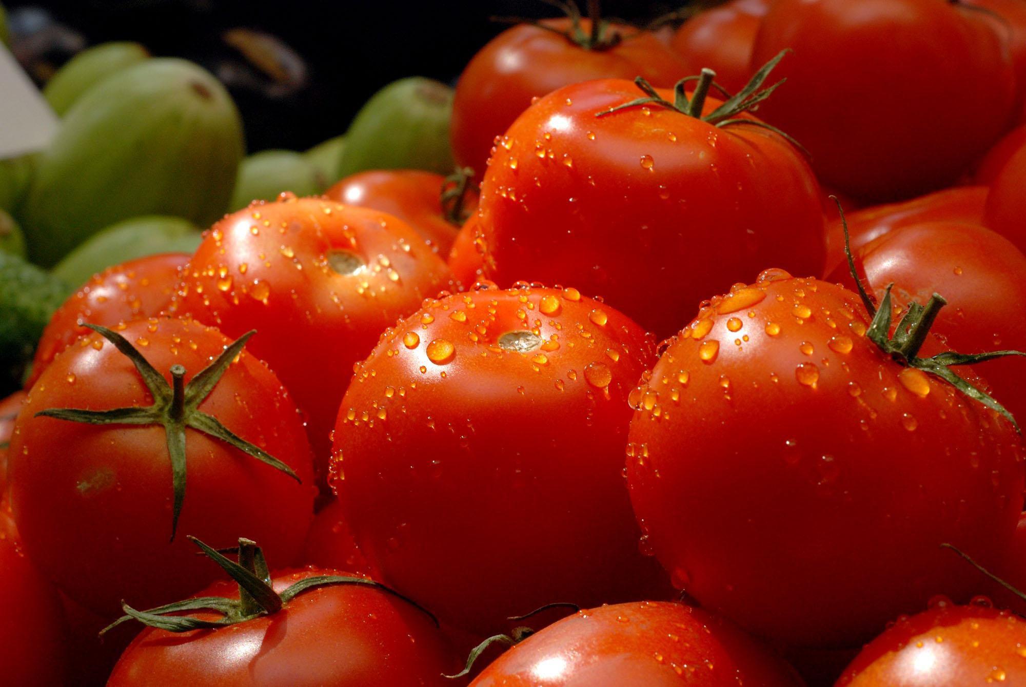 za 20 nasto zgolemen izvozot na domati i na krastavici