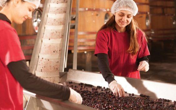 За да се произведе вино со висока вредност за здравјето неопходни се врвна технологија и знаење