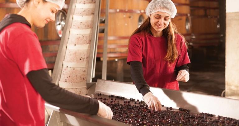 Photo of За да се произведе вино со висока вредност за здравјето неопходни се врвна технологија и знаење
