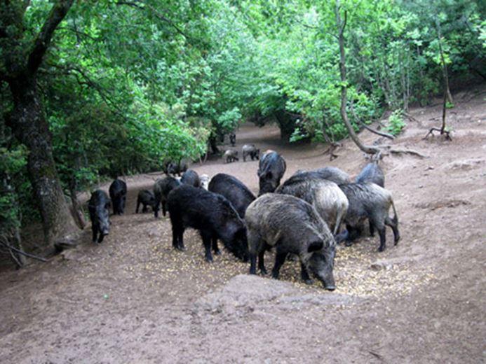 """Photo of Дозвола за лов во гевгелиско """"Милисин"""" чини 50 евра"""