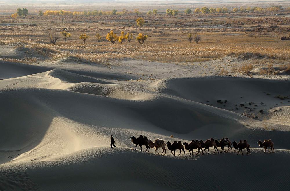 Photo of Кинезите ќе сеат ориз во пустина за да се спасат од глад