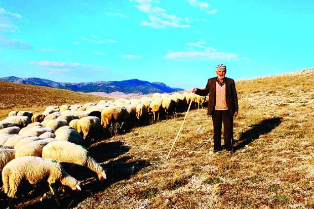 Photo of Ниту за плата од 500 евра – никој не сака да биде овчар