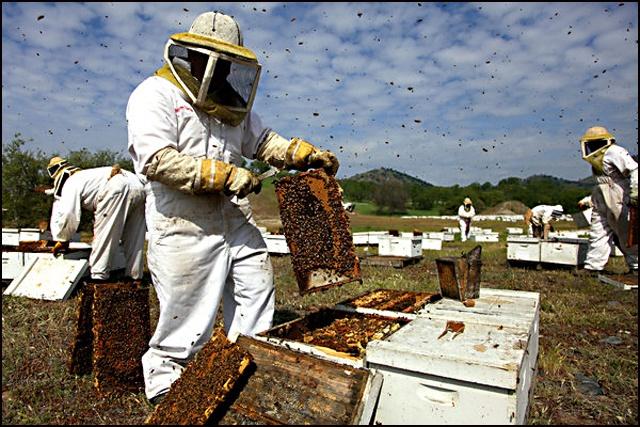 Photo of Продолжен рокот за обуките за пчелари