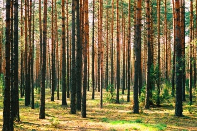 Photo of Сечењето на шумите нема да ја реши кризата со храната