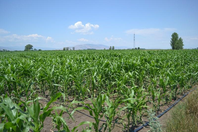 """Photo of Системите """"капка по капка"""" се уште недоволно искористени од земјоделците"""