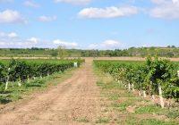 """Винариите """"Повардарие"""" и """"Гарланд агрофуд"""" ги изгубија лиценците за производители"""