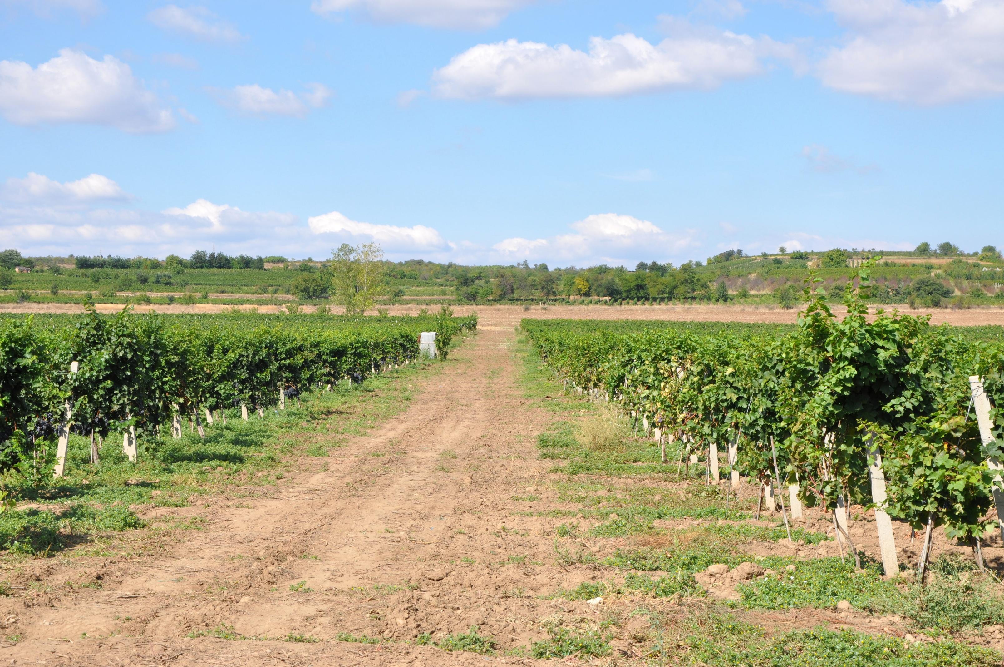 """Photo of Винариите """"Повардарие"""" и """"Гарланд агрофуд"""" ги изгубија лиценците за производители"""
