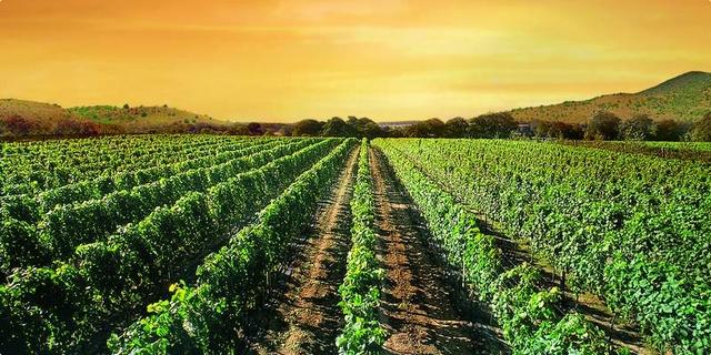 Photo of Во ПЕ Кочани за субвенции аплицирале 3046 земјоделци