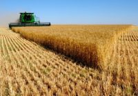 Житото, наместо на продажба, на чување во силоси додека не се добие повисока цена