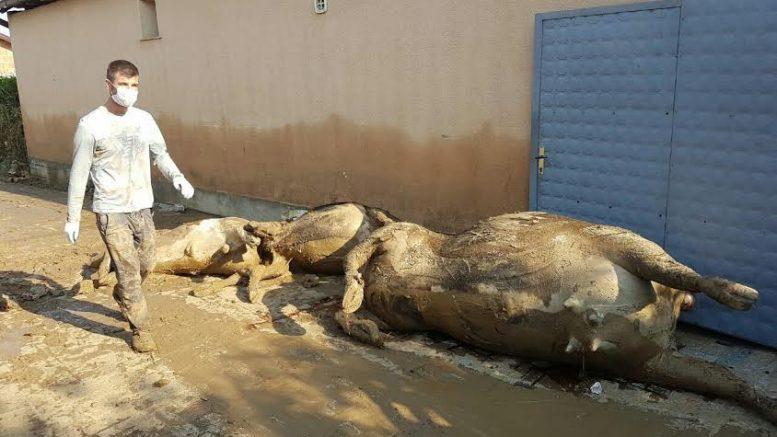 Photo of АХВ: да се пријават угинатите и исчезнатите животни