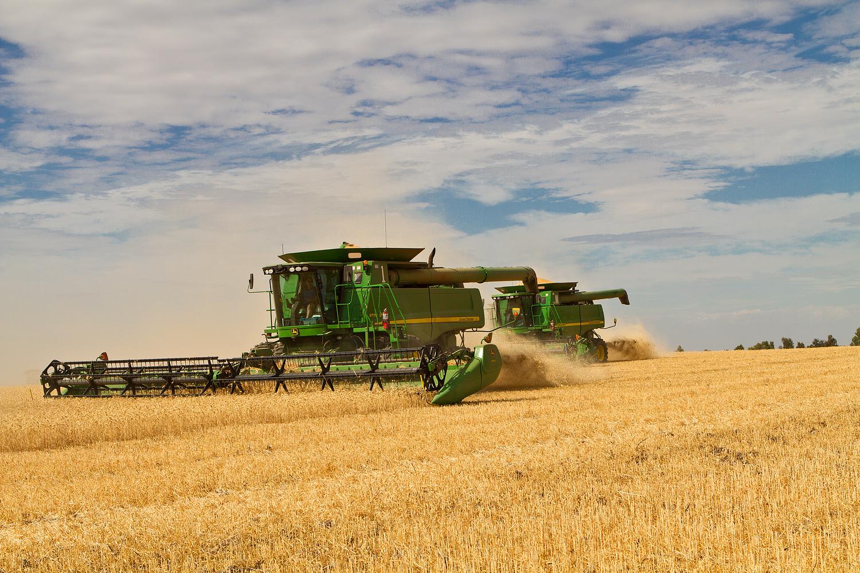 Photo of Досега откупени над 70 илјади тони пченица