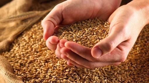 Photo of Фармерите во Русија очекуваат да приберат 115 милиони тони жито
