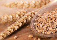 Субвенции за складирање на пченица