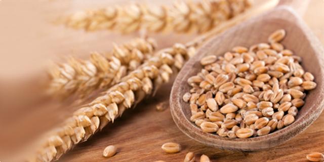 Photo of Субвенции за складирање на пченица