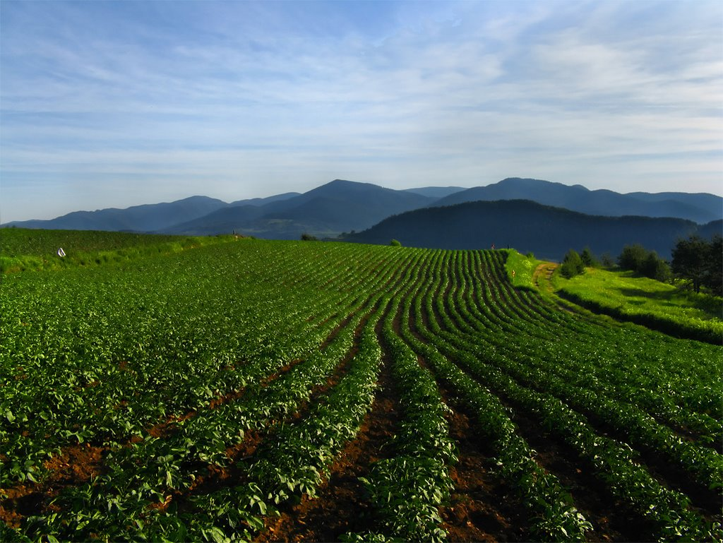 Photo of Тече рокот за пријавување субвенции за осигурување на земјоделското производство