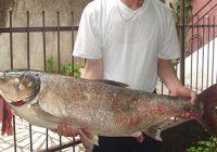 Велешанец улови риба тешка 18,3 кг