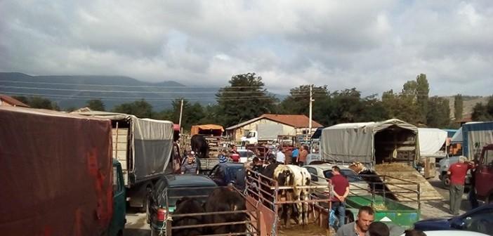 Photo of Започна со работа добиточниот пазар во Кривогаштани