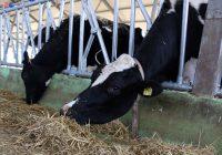 """ЗK """"Пелагонија"""" ќе донира 100 тони сточна храна во настраданите подрачја"""