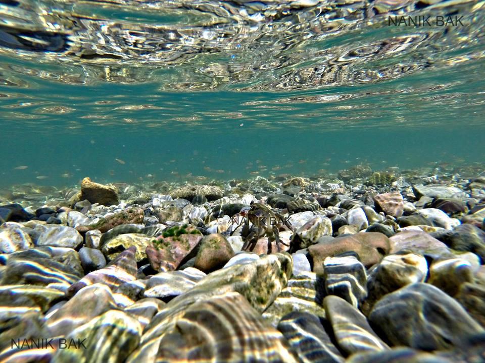 Photo of Чистата вода го врати ракот во Охридското Езеро