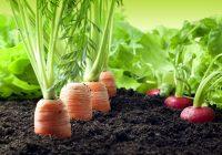 Голема холандска компанија најавува инвестиција во земјоделството