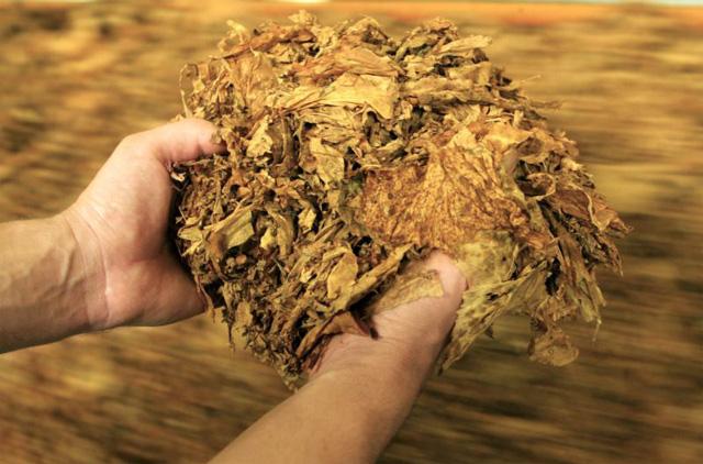 Photo of Иднината на производството на тутун