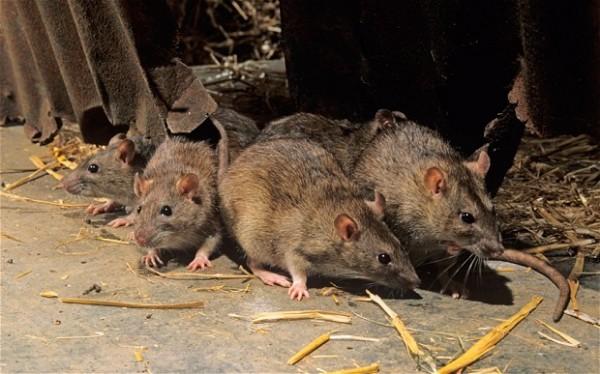 Photo of Наезда на стаорци во Струмичко