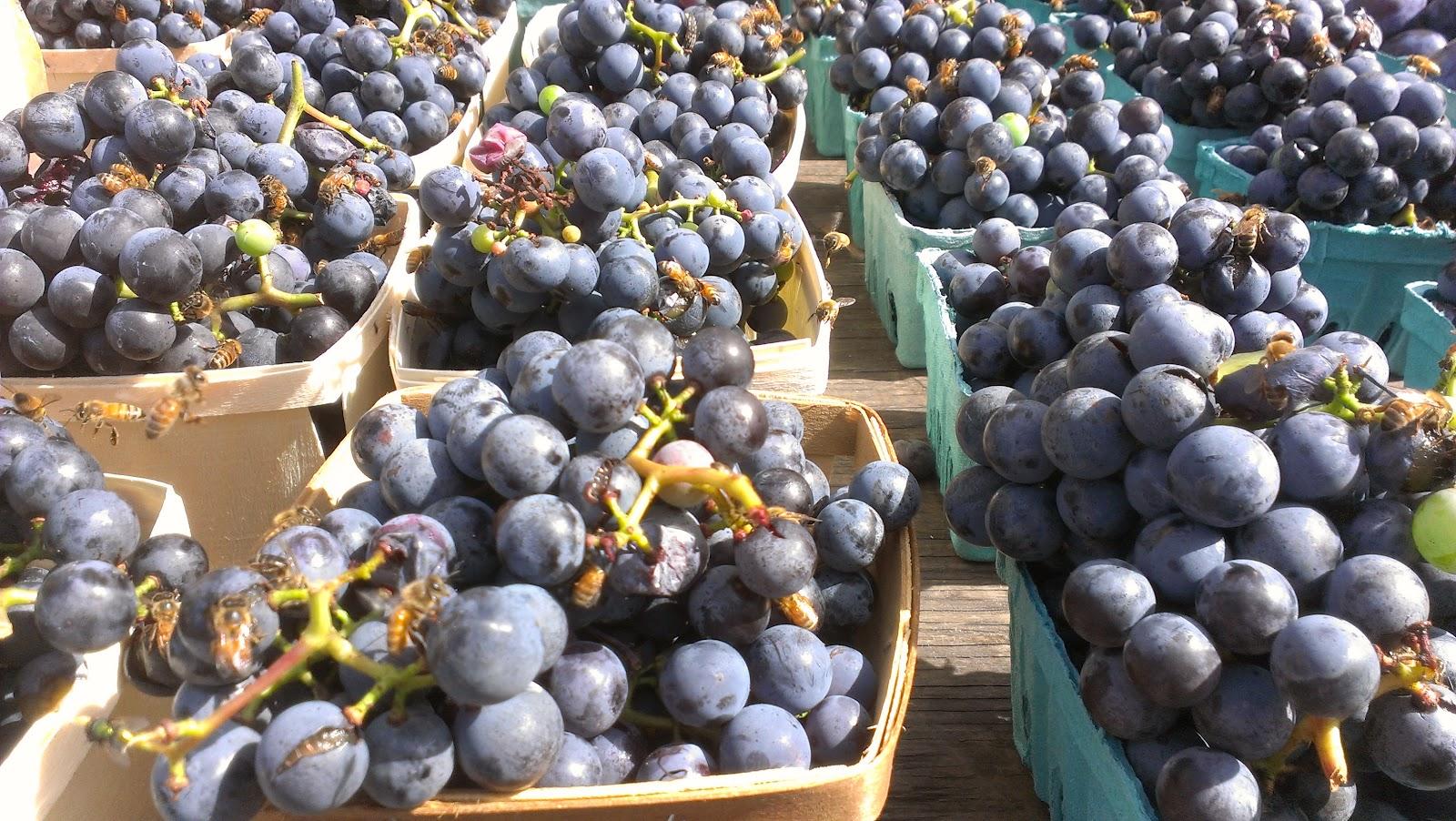 Photo of Нема блокирани откупувачи на грозје, само треба да се усогласат според законот