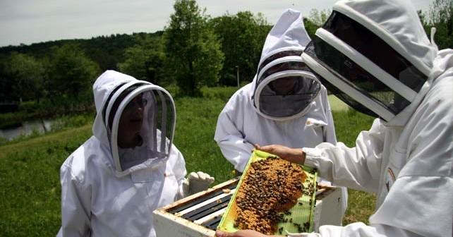 Photo of Пчеларството- хоби или бизнис?