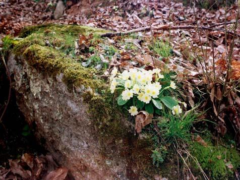 Photo of Уништена флората на Јакупица и Даутица од нестручно берење билки
