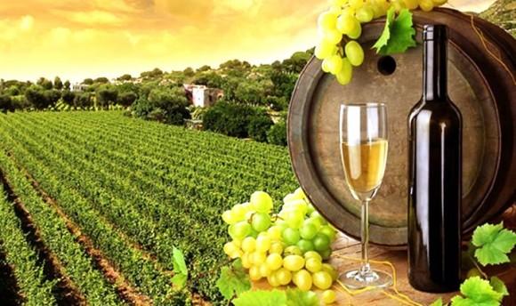 Photo of Винарниците ќе добијат 8 отсто попуст за еднократна исплата на грозјето