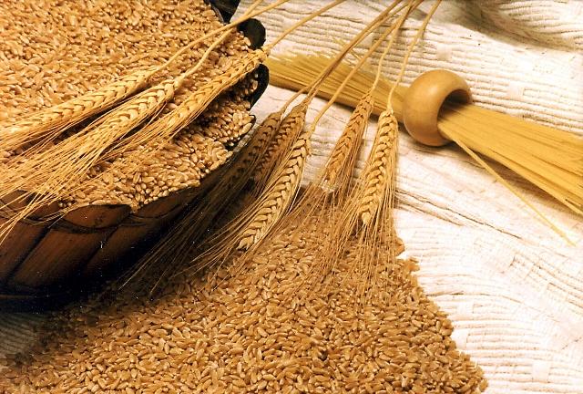 Photo of Во стоковите резерви има пченица, ама нема брашно и конзерви