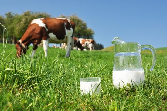 Photo of За 25 години двојно повеќе млеко од млечна крава