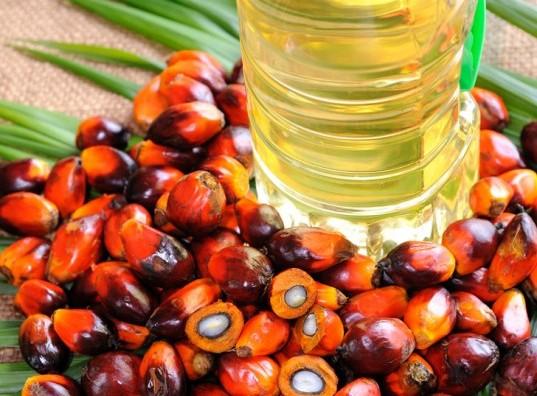 Photo of Земјоделците и производителите на палмино масло се здружуваат за спас на шумите