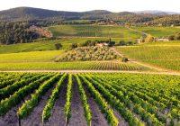 Дополнителен рок за субвенции за нови лозови и овошни насади