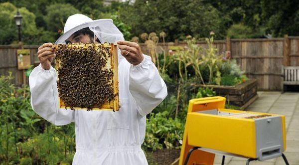 Photo of Изумира традиционалното одгледување пчели во кошница