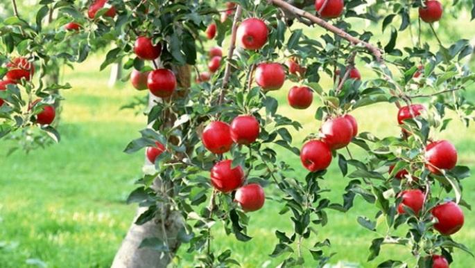 Photo of Романци им ги обраа јаболката на Македонците
