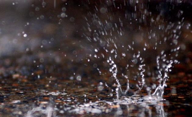 Photo of Врнежите добри за плодната почва, но и за штетниците