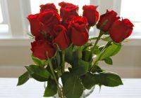 Како да се припремат ружите за зимата?
