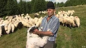 Photo of Пријавување за субвенции на плати за овчарите
