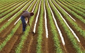 Photo of Земјоделците да користат современи технологии за поголема конкурентност