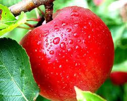 Photo of Знаете ли како најдобро се чуваат јаболката?