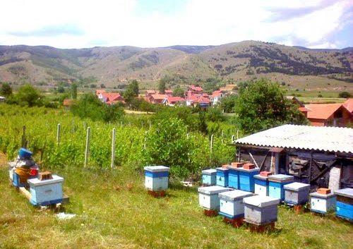 Електричните пастири најдобри чувари на пчеларниците