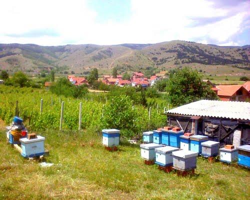 Photo of Електричните пастири најдобри чувари на пчеларниците