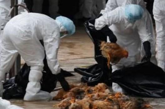 На Македонија и се приближува опасниот птичји грип