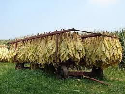 Photo of Откупени 80 % од тутунот