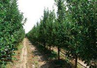 Поголеми субвенции за градинарство и овоштарство