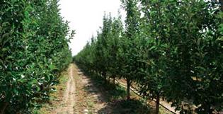 Photo of Поголеми субвенции за градинарство и овоштарство