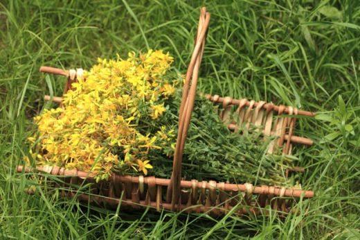 Собирање и сушење лековити растенија