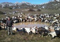 Сточарите во штипско незаинтересирани да добијат субвенции за плати