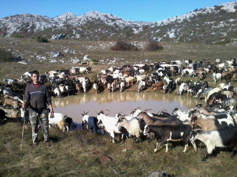 Photo of Сточарите во штипско незаинтересирани да добијат субвенции за плати